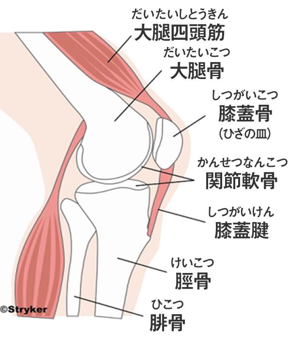 「膝関節」の画像検索結果